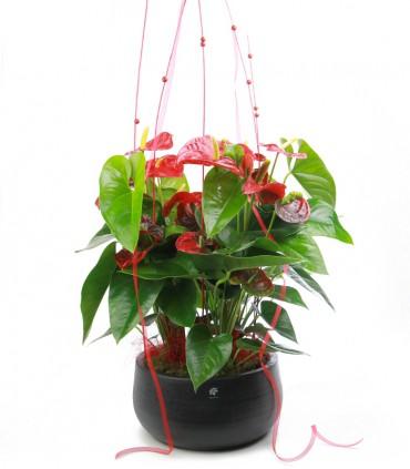 Centro Anthurium Rojo