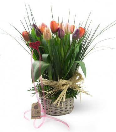 Tulipanes Linear