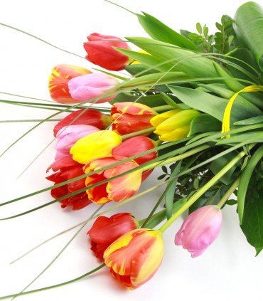 Tulipes Mix