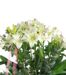 lilium blanc