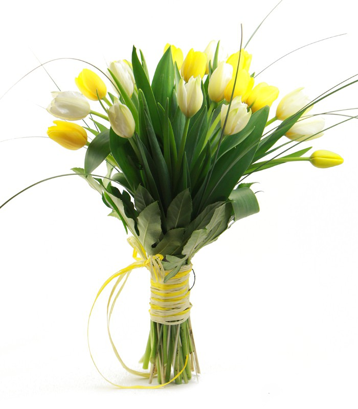Tulipes Grogues