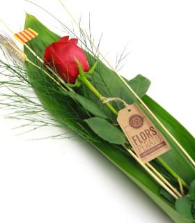 Pack Rosas Sant Jordi