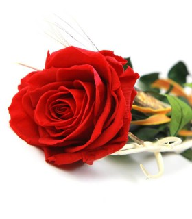 Rosa Roja Liofilizada