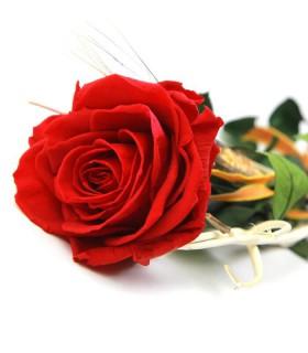 Rosa Vermella Liofilitzada