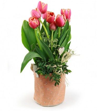 Saquet de Tulipes