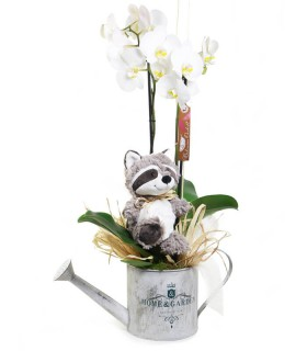 Orquídia & Mapache