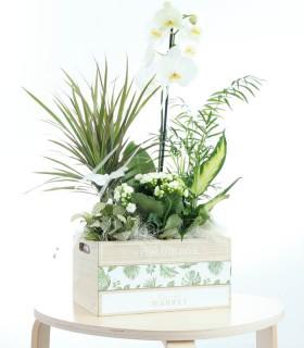 My Box of Plants