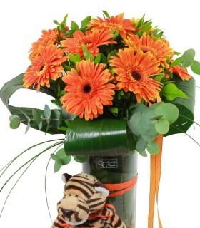 Gerberes Taronjes & Tigre