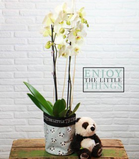 Orquidea & Panda