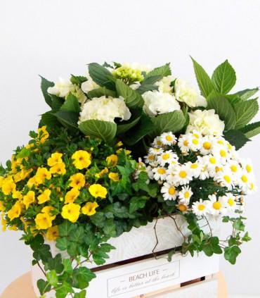 Cesta de plantas Dia de la Madre