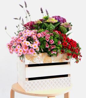 Plantas Dia de la Madre