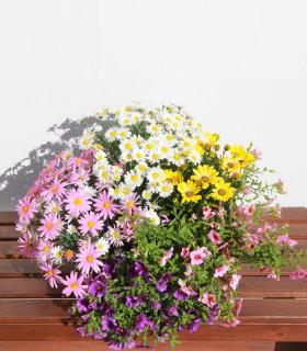 Planta d'exterior