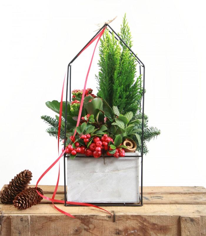 Cesta de Plantas de Navidad
