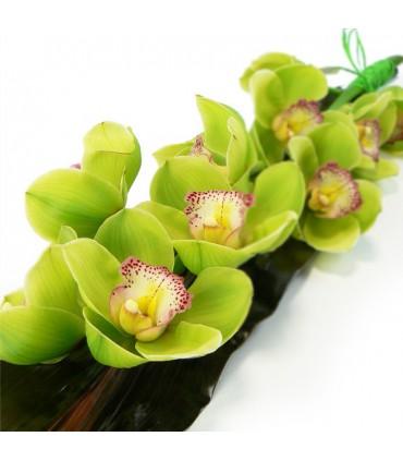 Orquidea Cymbidium
