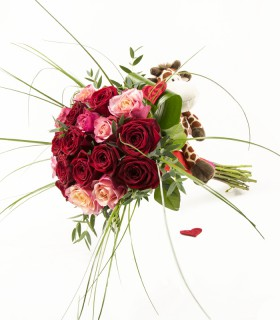 18 Rosas & Jirafa