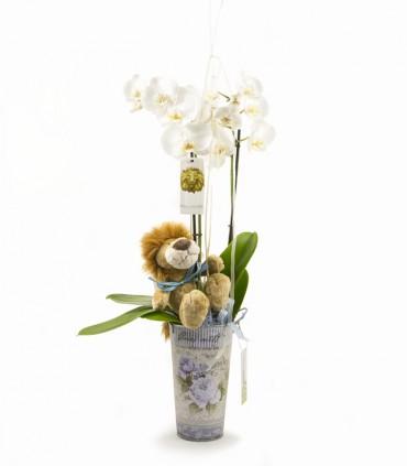 Orquídea & León