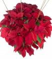 Poinsettia De Luxe