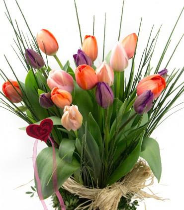 Tulipes Linear