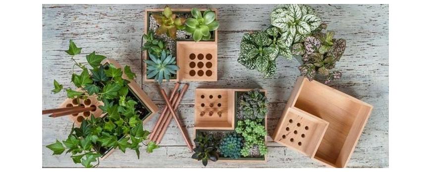 Regalar plantas y tipos de macetas florestore for Tipos de plantas para macetas
