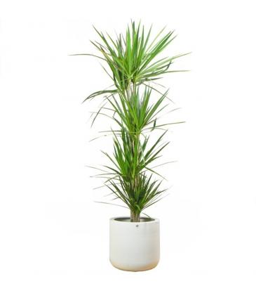 Regalar plantas de interior ideas para la oficina - Florestore