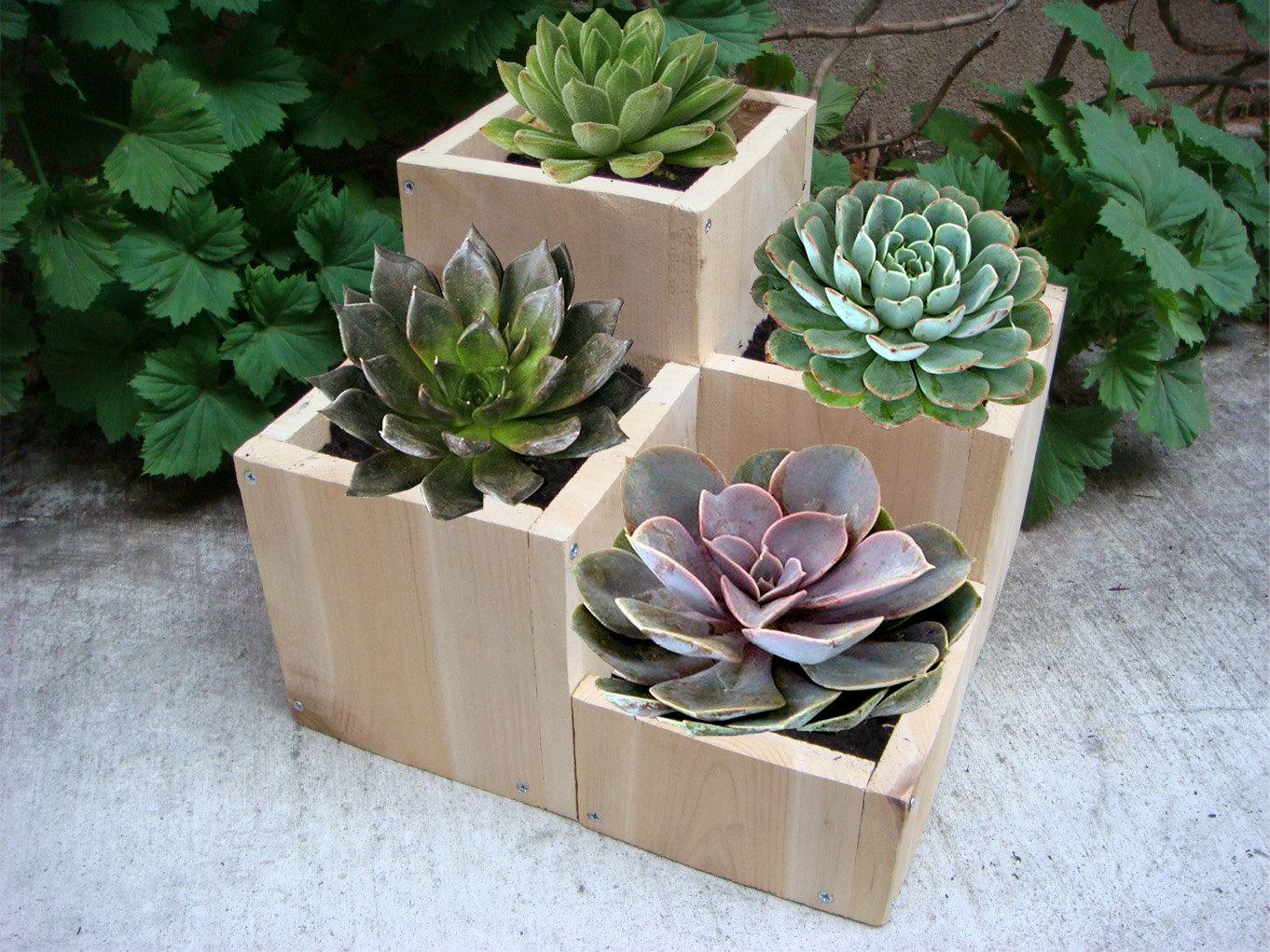 regalar plantas u tipos de macetas