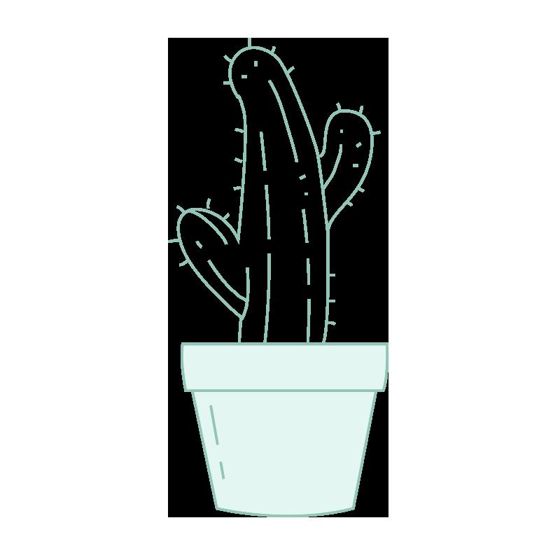 Consejos de mantenimiento para crasas y cactus.