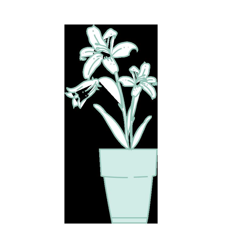 Consejos de mantenimiento para plantas con flores.